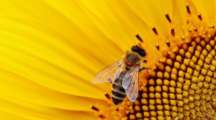 Plan a Pollinator Friendly Landscape Installation