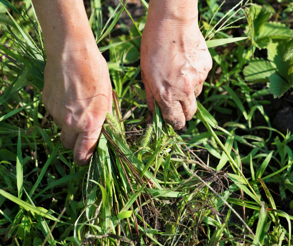 What to do About Weeds